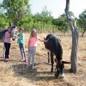 Trois fillettes caressant des ânes