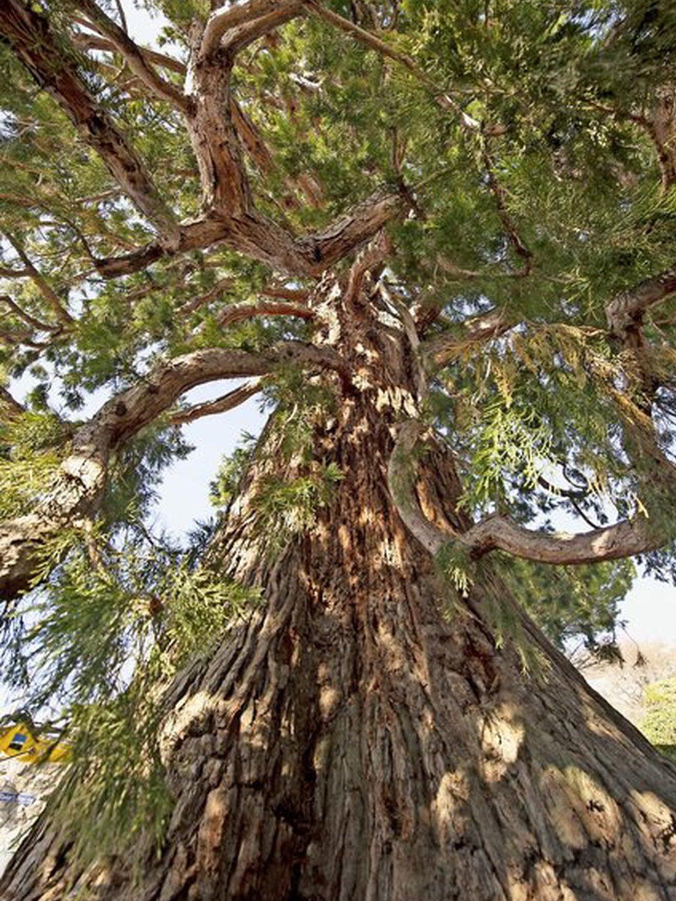 Affiche de l'évènement Les supers pouvoirs des arbres